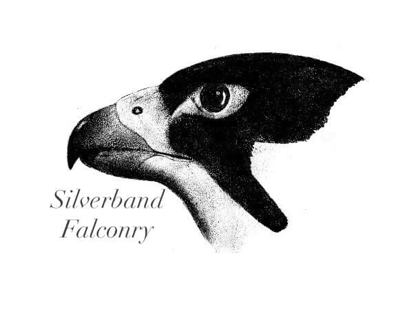 Silverband Falconry