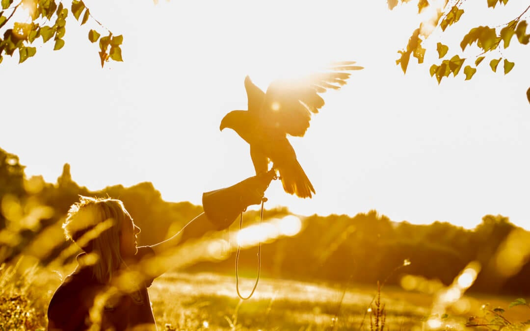Coda Falconry: The Freedom of Falconry